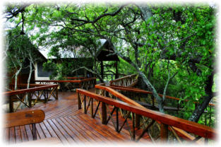 Accommodation in Great Kruger Area Hoedspruit at Lion Tree Top Lodge