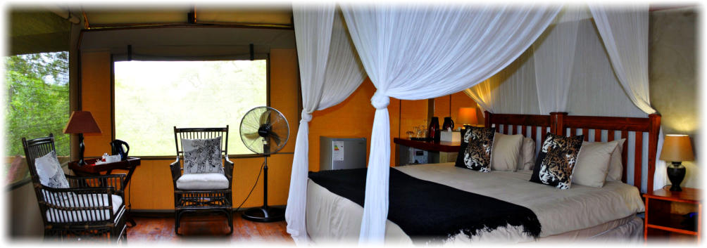 Luxury Accommodation at Lion Tree Top Lodge near Orpen Gate